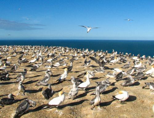 Jak se dělá láska (nejen) k ptákům