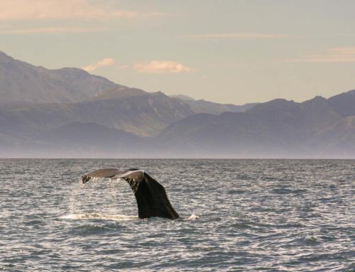 Ověřené tipy, kam za divokými zvířaty na Novém Zélandu