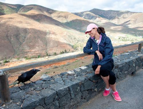 Za ptáky na Kanáry + Hravý checklist VOLNĚ KE STAŽENÍ